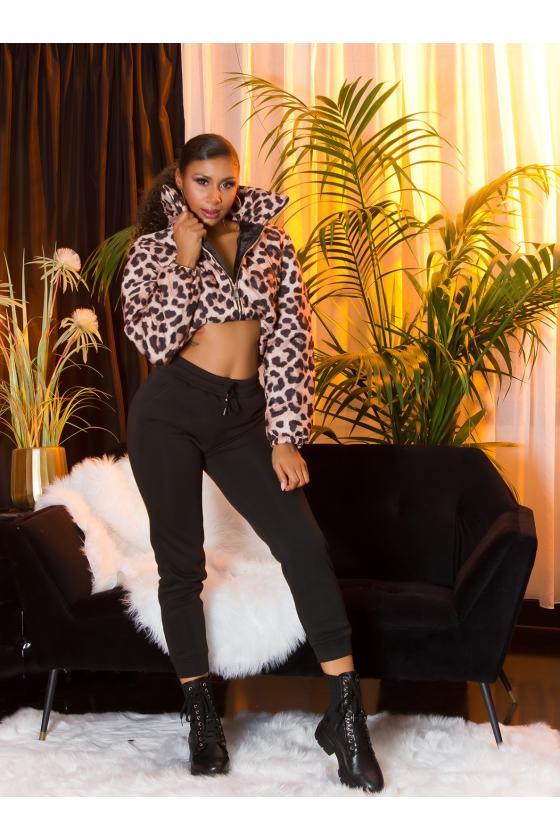 Raudonos spalvos kardinagas su suvarstymu_214156
